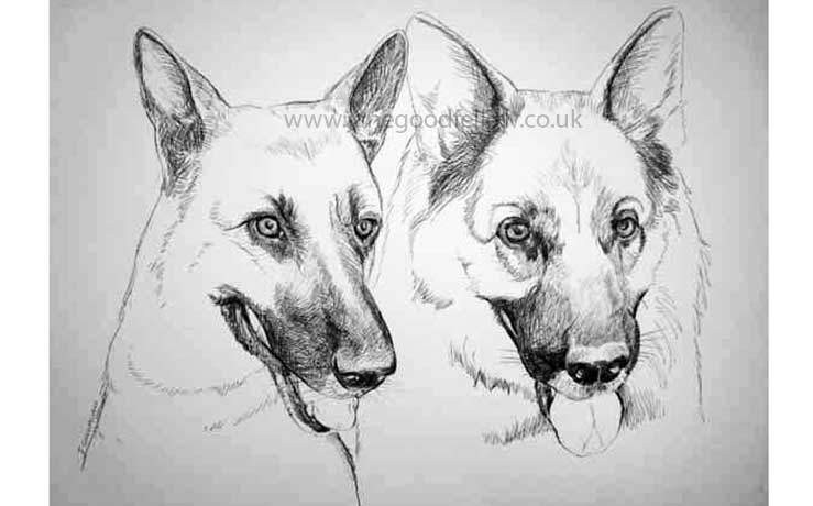 "Biro drawing of ""Ajax and Alex"", two brave German Shepherds"