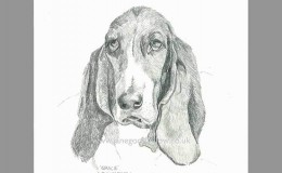 "Pencil drawing of a dog called ""Gracie"""