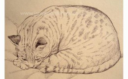 "Biro drawing of ""Lynx"" a gorgeous stripy tiger of a cat"