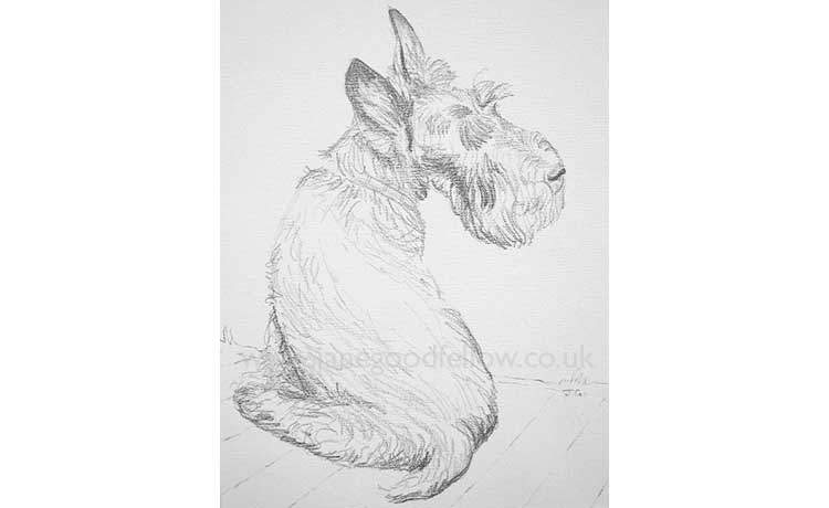 "Pencil drawing of a dog called ""Maggie"""