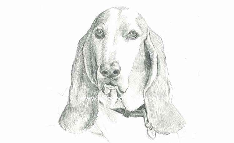 "Pencil drawing of a dog called ""Oliver"""