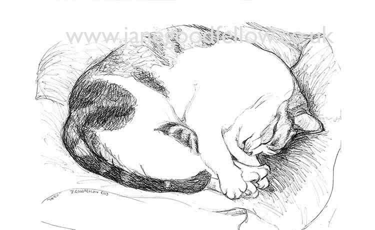 "Biro drawing of ""Shica"" with beautiful feet"