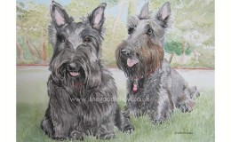 "Watercolour of dogs ""Henry & Maggie"""