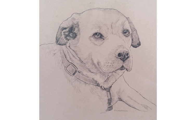 Pencil drawing of Judy's dog