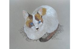 Mixed Media drawing of Moonin the cat