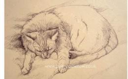 "Biro drawing of ""Fluffy"" sleeping"