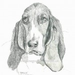 """Pencil drawing of a dog called """"Gracie"""""""