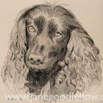 """Pencil drawing of """"Maizie"""" an eager-to-please dog"""