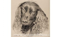 "Pencil drawing of ""Maizie"" an eager-to-please dog"