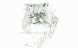"Pencil drawing of a cat called ""Muti"""