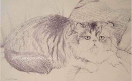 "Biro drawing of ""Nemo"" ""Cat of the year"" in South Africa"