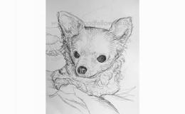 """Biro drawing of """"Truffle"""" a tough little chihuahua"""