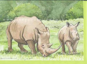 For Sale - Rhino Card