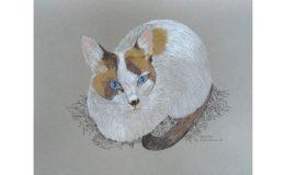 Mixed Media drawing of Moonin the cat