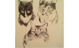 Pencil drawing of three cats